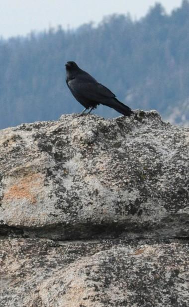 11-09 Yosemite rain_3883_edited-1